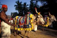 Stock Photo of Sri Lanka, Colombo, oxcart in hindu festival