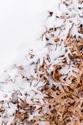 Fallen leafs and snow during winter time Stock Photos