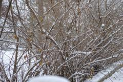 snow fall on tree branches - stock photo