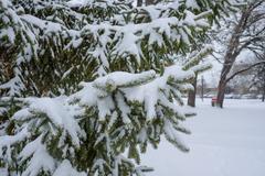 snow fall on pine tree - stock photo