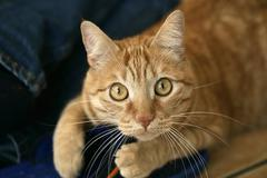 Cat's portrait Stock Photos