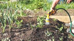 Water vegetable garden Stock Footage
