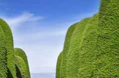 green hedge aisle - stock photo