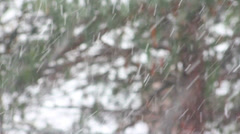 Trees in focus with snow in foreground out of focus Stock Footage