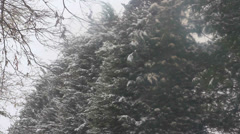 Heavy snow with evergreen trees in background Stock Footage