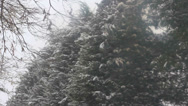 Stock Video Footage of Heavy snow with evergreen trees in background