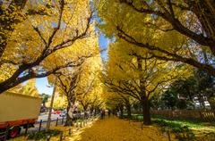 Ginkgo tree avenue heading down to the meiji memorial picture gallery, tokyo, Stock Photos