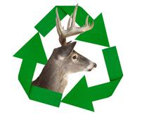 Recycle symbol with whitetail deer Stock Illustration