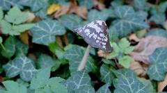 Growing wild mushroom Stock Footage