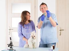 vet dog and client - stock photo