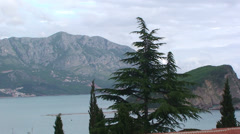 Spruce by the coast of Montenegro Stock Footage