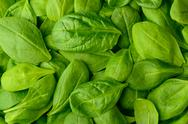 Stock Photo of fresh green basil