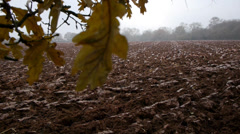Ploughed field and trees - moving camera. Stock Footage