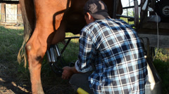 Milker peasant man milk cow with modern milking equipment Stock Footage