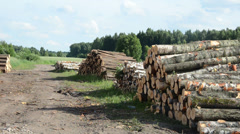 Sustainable organic wood fuel stacks and birch logs near forest Stock Footage