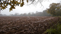 Ploughed field and trees. Stock Footage