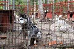 sad and tearful dog in captivity - stock photo