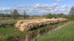 Reed stacks on a land strip in peat landscape divided by ditches + pan Stock Footage