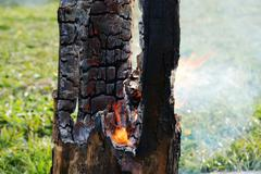 smouldering tree trunk burned out in the middle - stock photo