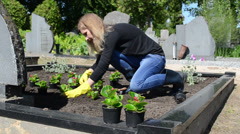 Woman wife plant begonia flowers on husband grave in cemetery Stock Footage