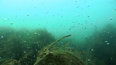 Underwater oxygen in quarry Stock Footage