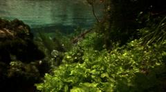 Underwater plants in river Stock Footage