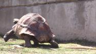 Stock Video Footage of Tortus Turtle Frank Buck Zoo Texas