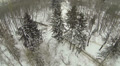 Flight over winter trees in park. Aerial HD Footage