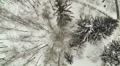 Winter forest. Top rotation  view. Aerial HD Footage