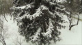 Slow flight around a tree with  snow. Aerial HD Footage
