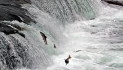 Salmon Jumping up the Brooks Falls in Alaska in Slow Motion Stock Footage