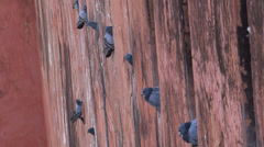 Pigeons are resting in their nests Stock Footage
