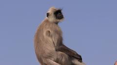 Monkey alone Stock Footage