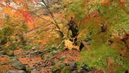In the autumn forest. Stock Footage