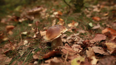 Hand picking a mushroom out of the ground Stock Footage