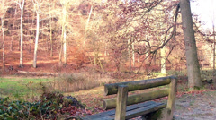 Bench in the autumn park. Stock Footage