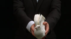 Groom releasing a dove on black background Stock Footage