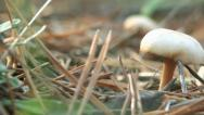 Stock Video Footage of mushroom closeup autumn