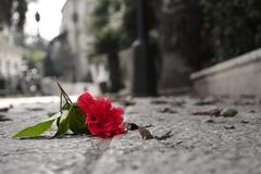 fallen flower - stock photo