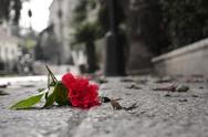 Stock Photo of fallen flower