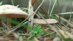Nature forest mushrooms autumn Stock Footage