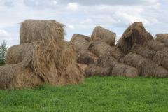 Stock Photo of straw bales on farmland