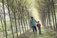 Stock Photo of A man and a boy walking down an avenue of trees