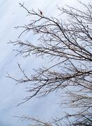 Bare branches of a tree against the morning sky Stock Photos