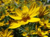 Stock Photo of Yellow Spring Flower