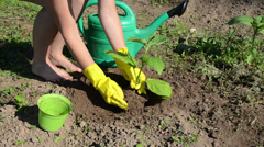 Girl in pit planted seedling bury the roots watered plant Stock Footage