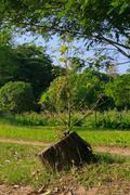 Tree never die Stock Photos