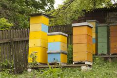apiary on a country site - stock photo