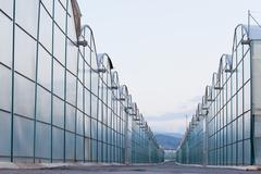 large scale industrial greenhouse lit by sunet - stock photo