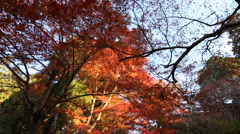 Autumnal Leaves in Kyoto JAPAN Stock Footage